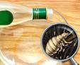 Уксус против вшей и гнид: действительно ли он эффективен и как его применять
