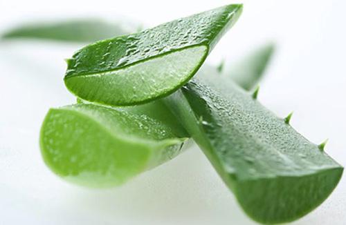 Сок алоэ – наиболее популярное лекарство для лечения ожогов на лице. С помощью средств на его основе делаются специальные примочки и компрессы.